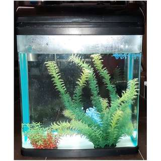 Curve Glass 40-litre Aquarium Fish Tank (H 46 cm, L 38cm, B 30 cm)