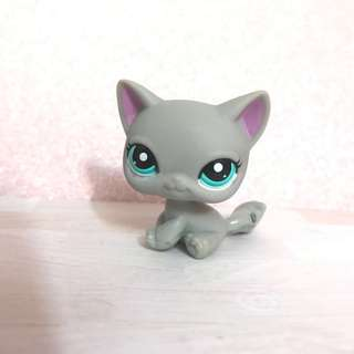 Littlest pet shop RARE Shorthair Cat