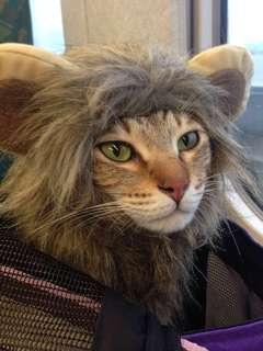 🚚 獅子頭頭飾 #一百元好物