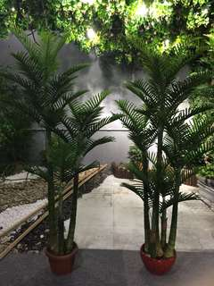 2m tall artificial palm