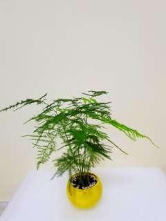 Mini plant (yellow)