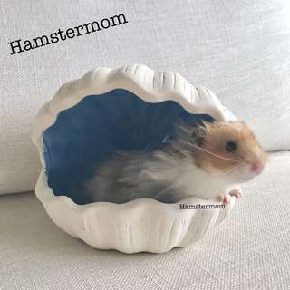 Syrian Hamster Blue Clam Shell Ceramic Hideout House Toy