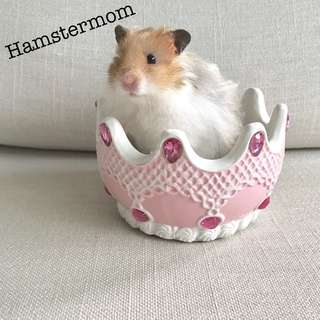 Pink Ceramic Princess Food Bowl for Hamster / Rabbit / Guinea Pig / Chinchillas