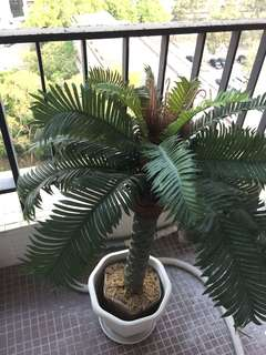 artificial palm tree 仿真樹植物裝飾
