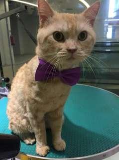Very affordable cat grooming from $45