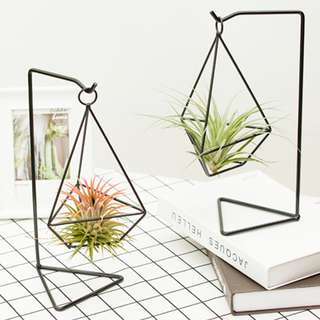 Air Plants Collections: Air Plants Hanging Display