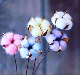 木錦 乾燥 花 (4色)