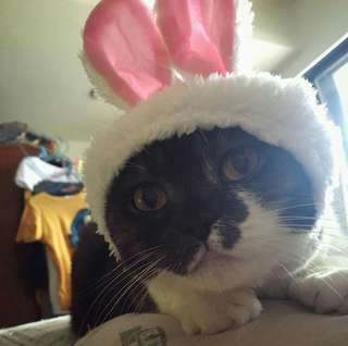 🚚 貓咪 白色兔耳朵帽子/頭套