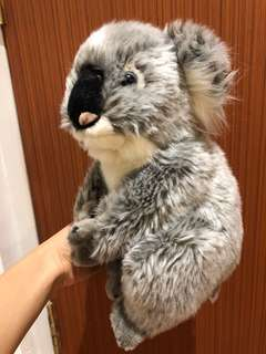 BN National Geographic Koala soft toy