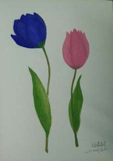 Tulip 🌷