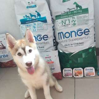 Monge Natural superpremium and Special dog dry food and wet food