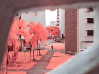 Cameras for infrared photography