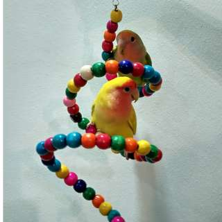 Colorful Parrot Twirl Toy