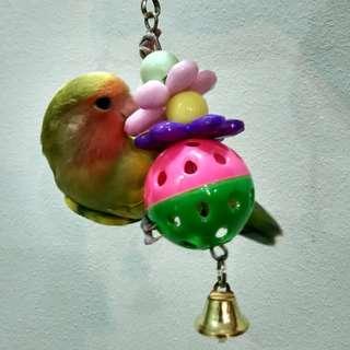 Delightful acrylic toy