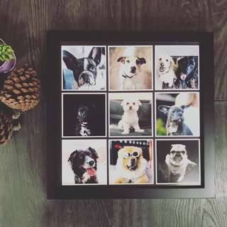 Framed Photo Magnets for your Pets