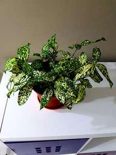 Plants Real M size pot