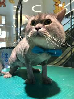 Cat grooming(hari raya special)fr 45
