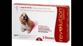 Revolution dog 10~20kg