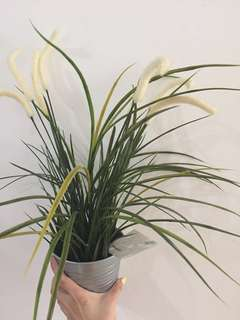Pot bunga ikea