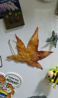 Autumn Leaf magnet