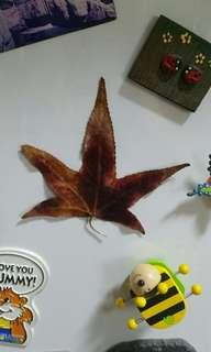 Autumn Leaf Magnet