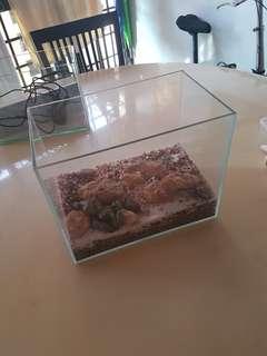 Glass Tank for terrarium