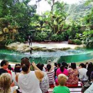 $20 Adult Singapore Zoo