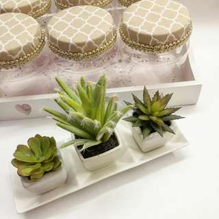 3-in-1 Succulent SET