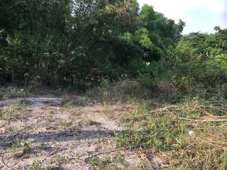 4.2 Hectares Residential & Farm Lot for Sale (San Patricio, Mexico, Pampanga) RUSH