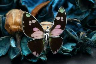 Navia Jewelry Real Butterfly Wing Graphium weiskei Silver Brooch Pendant Korea