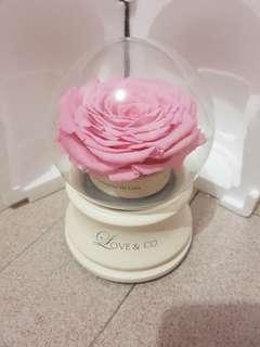 Love & co rose music box