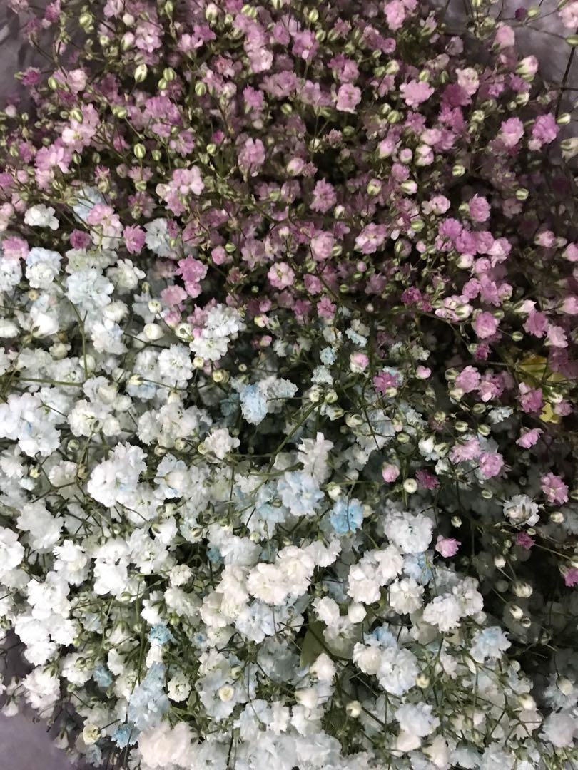 Mixed Baby Breath Pink And Blue Gardening Flowers Bouquets On
