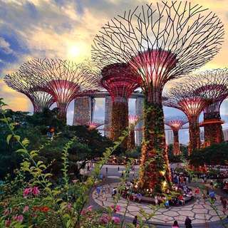 Gardens By The Bay (2 Domes) + OCBC Skywalk PACKAGE 🌺