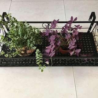 BNIB Metal Flower Rack in Black for Garden/Balcony/ Corridor