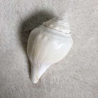 Blowing Conch Shell