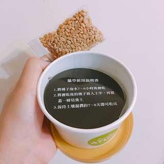 🚚 AFU 阿福 貓草杯杯 #五十元好物