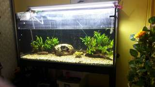 Fish Tank and other accessories (as a set)