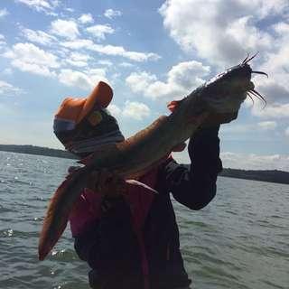 Gemang fish ( Eel Tail )