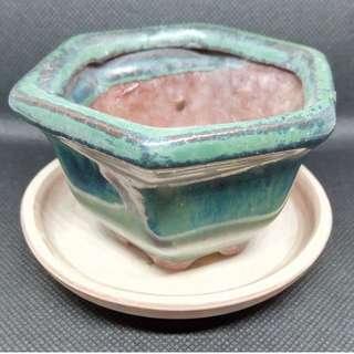 Beautiful Mini Bonsai Vase