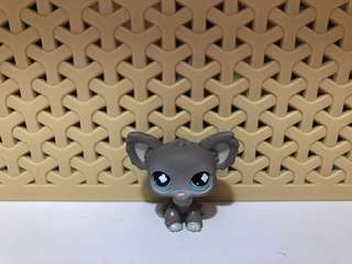 Littlest Pet Shop/LPS Chihuahua