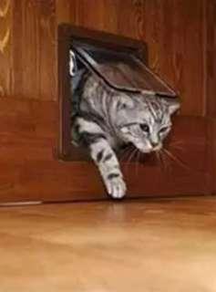 Cat door (Pre-order 30days)