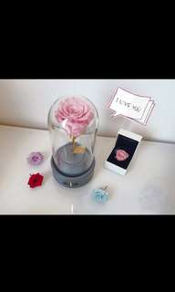 Preserved rose music box