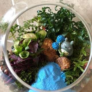 DIY Terrarium Set (Totoro theme)