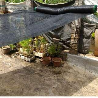 Jaring perlindungan tanaman paranet pokok bunga