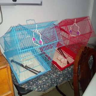 Colored bird cage