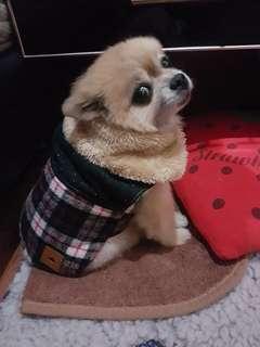Baju anak anjing ukuran s