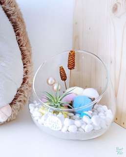 Aerium: Amaze Vase with air plant and cotton flower