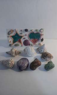 Deco Painted Real Shells With Picture Frames