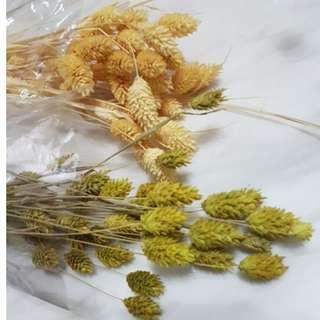 乾燥花 花束 加那利 材料