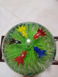 5fish display (16cm